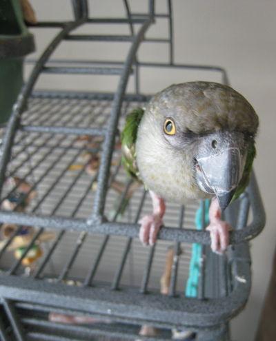 Mr_Bird